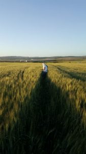 העברת זכויות | בנחלה זכויות בנחלה חקלאית
