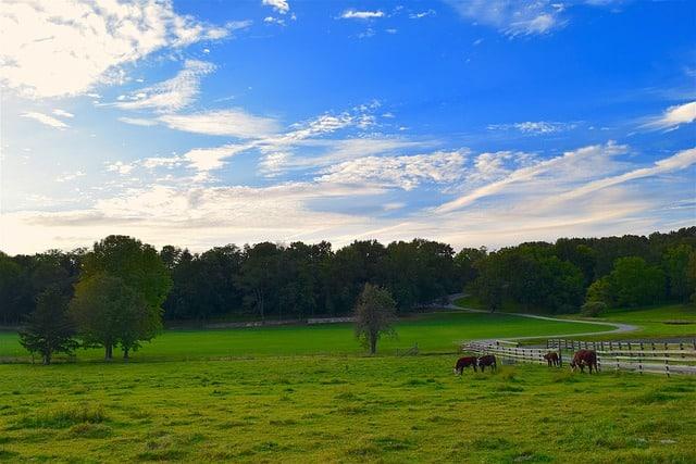 זכויות בנחלה העברת זכויות במשק חקלאי
