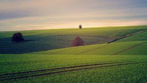 זכות בנחלות זכויות בנחלות העברת זכויות במשק חקלאי