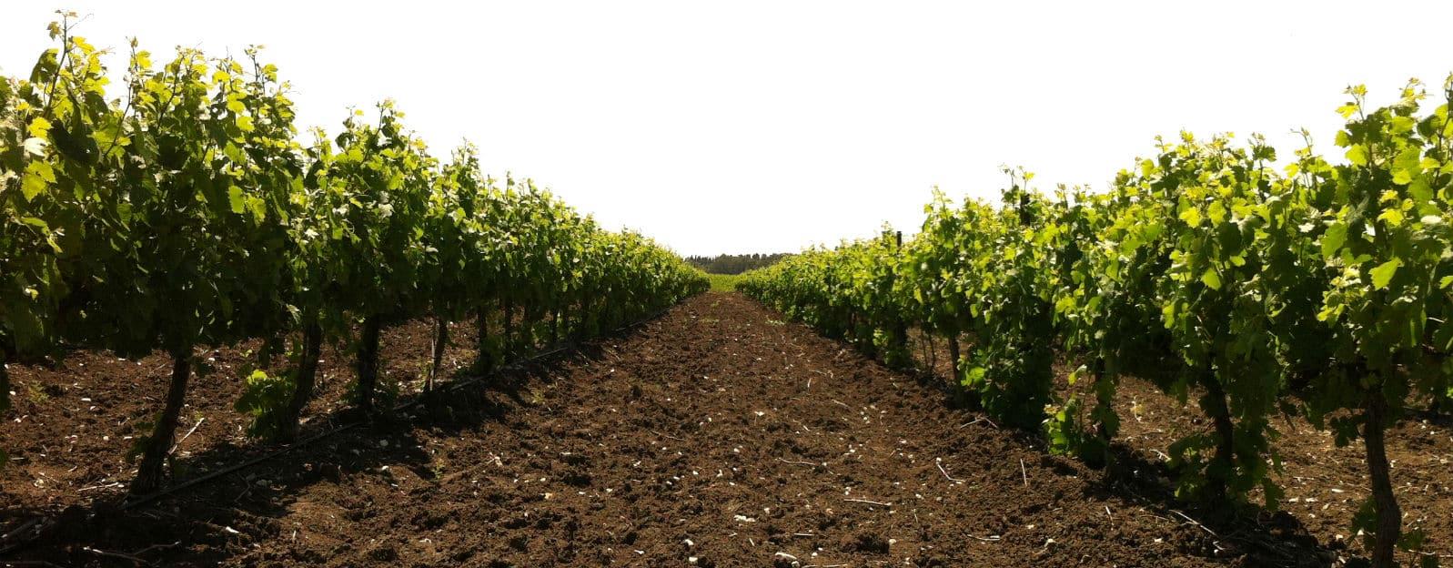 ייצוג מגזר חקלאי | ייצוג מושבים | ייצוג קיבוצים | ייצוג אגודות שיתופיות