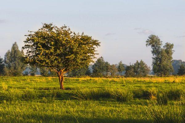 ייצוג מגזר חקלאי | מושבים | קיבוצים | אגודות שיתופיות