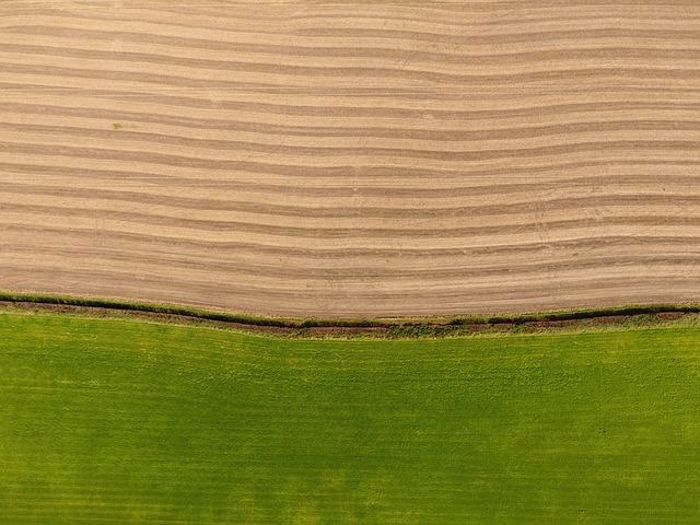 ירושת נחלה - חלוקת נחלה בין יורשים - ירושת המשק החקלאי - חלוקת ירושה משק חקלאי