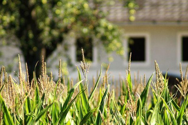שימוש חורג בקרקע חקלאית