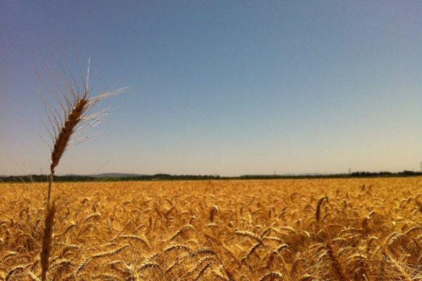 """פל""""ח – פעילות לא חקלאית בנחלה"""