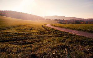 הסכם שכירות קרקע חקלאית