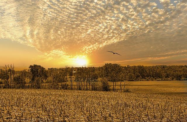 החכרת קרקע חקלאית
