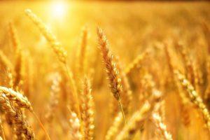 שימוש חורג בחלקות חקלאיות